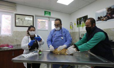 Gaziantep Büyükşehir, yaralı kediye 'nefes' oldu