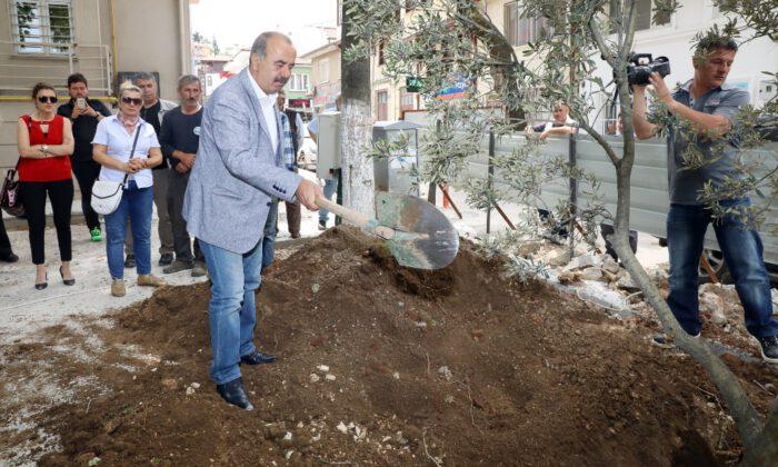 Mütareke meydanına barışın simgesi zeytin ağacı dikildi