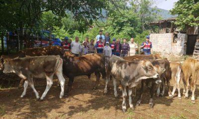 Bursa Karacabey'de büyükbaş hayvan hırsızlığı
