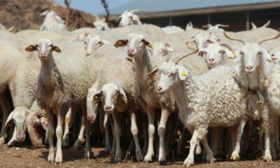 Güvenlik teli, hayvan hastalıklarını da önlüyor