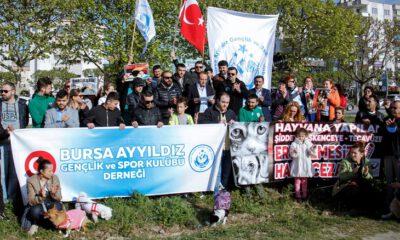 Bursa'da hayvanseverler sokak hayvanları için bir araya geldi