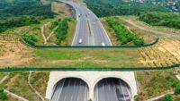 Yaban hayvanlarının güvenli geçiş rotası: Ekolojik köprüler
