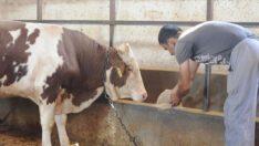 Kovid-19 nedeniyle hayvancılık işletmelerine yem desteği