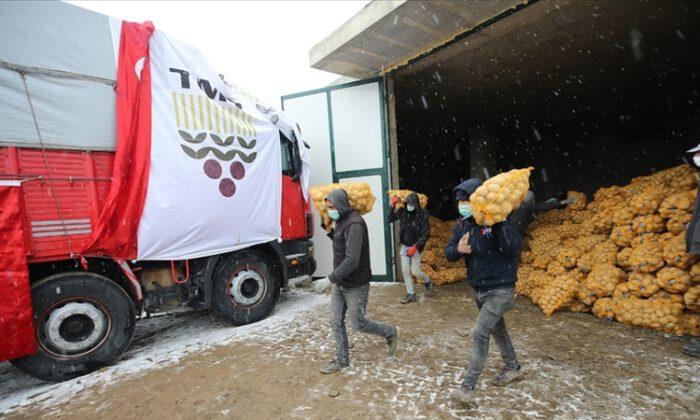 TMO, dağıtılacak patates alımına başladı