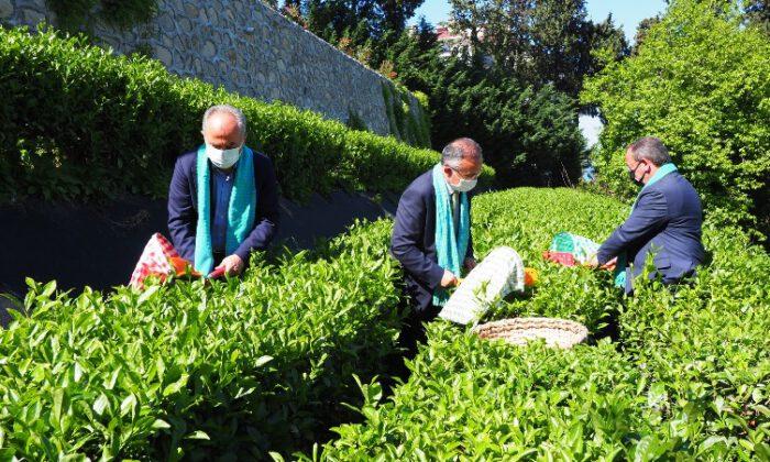 Pandemi Rizelileri çay bahçelerine döndürdü