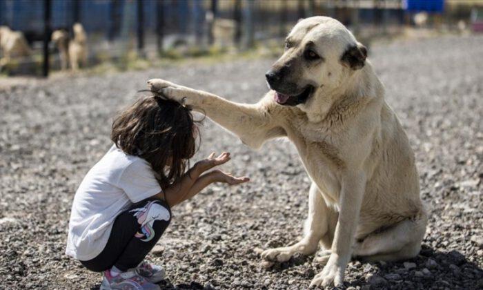 Başkentte 1000 köpek kapasiteli Patipark açıldı