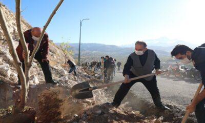 Kayseri Talas'ta yeşil seferberlik sürüyor