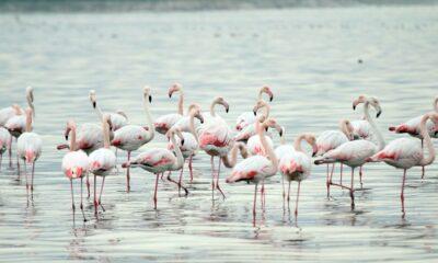 İzmit Körfezi'nde canlı türü sayısı artıyor