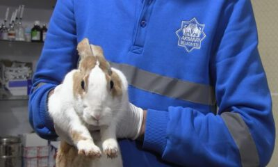 Aksaray'da yaralı tavşan tedaviye alındı