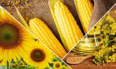 Çiftçilerin verimi yüzde 26 arttı