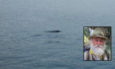 Muğla Fethiye'de fok balığı görenleri heyecanlandırdı