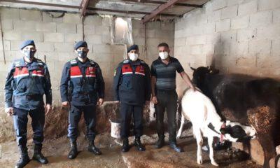 Aksaray Jandarması, kayıp hayvanları drone ile buldu