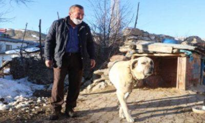 Sivas'ta kangallar ayıya geçit vermedi!